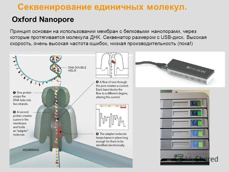 Секвенирование единичных молекул. Oxford Nanopore Принцип основан на использовании мембран с белковыми нанопорами, через которые протягивается молекула ДНК. Секвенатор размером с USB-диск. Высокая скорость, очень высокая частота ошибок, низкая произв