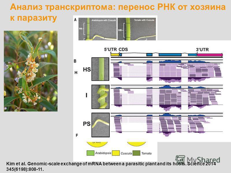 Анализ транскриптом: перенос РНК от хозяина к паразиту Kim et al. Genomic-scale exchange of mRNA between a parasitic plant and its hosts. Science 2014 345(6198):808-11.