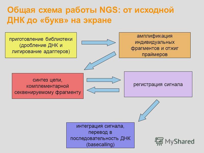 Общая схема работы NGS: от исходной ДНК до «букв» на экране приготовление библиотеки (дробление ДНК и лигирование адаптеров) амплификация индивидуальных фрагментов и отжиг праймеров синтез цепи, комплементарной секвенируемому фрагменту регистрация си