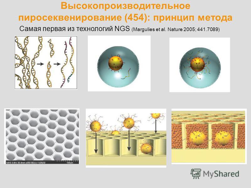 Высокопроизводительное пиросеквенирование (454): принцип метода Самая первая из технологий NGS (Margulies et al. Nature 2005; 441.7089)