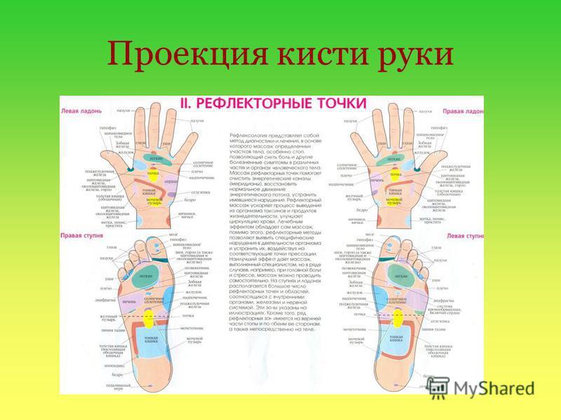 Проекция кисти руки