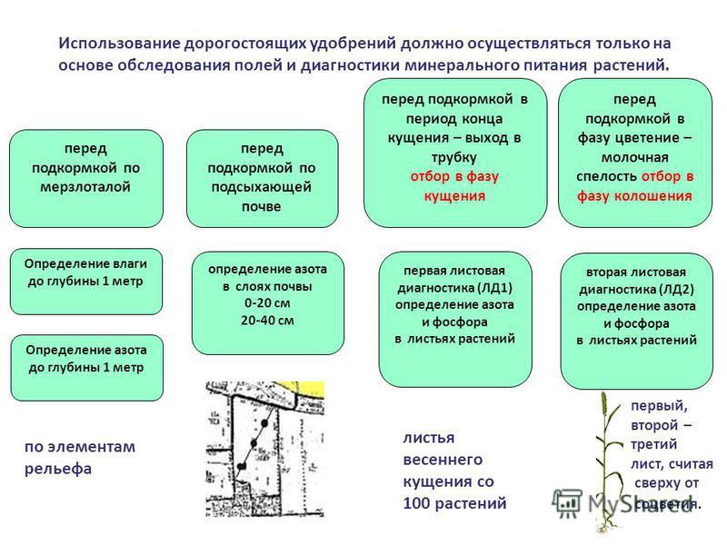 Использование дорогостоящих удобрений должно осуществляться только на основе обследования полей и диагностики минерального питания растений. Определение влаги до глубины 1 метр перед подкормкой по мерзлоталой Определение азота до глубины 1 метр перед