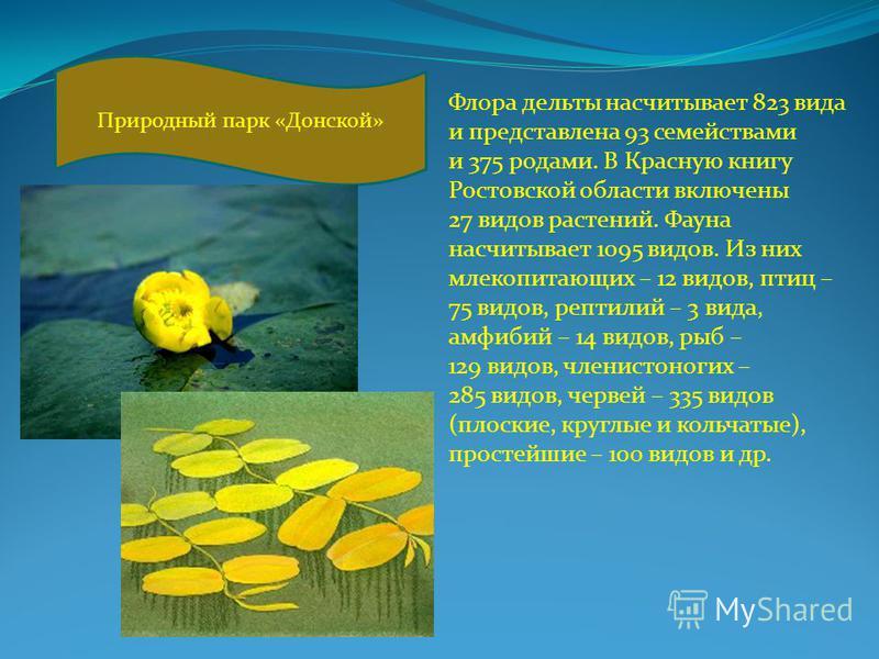 Флора дельты насчитывает 823 вида и представлена 93 семействами и 375 родами. В Красную книгу Ростовской области включены 27 видов растений. Фауна насчитывает 1095 видов. Из них млекопитающих – 12 видов, птиц – 75 видов, рептилий – 3 вида, амфибий –