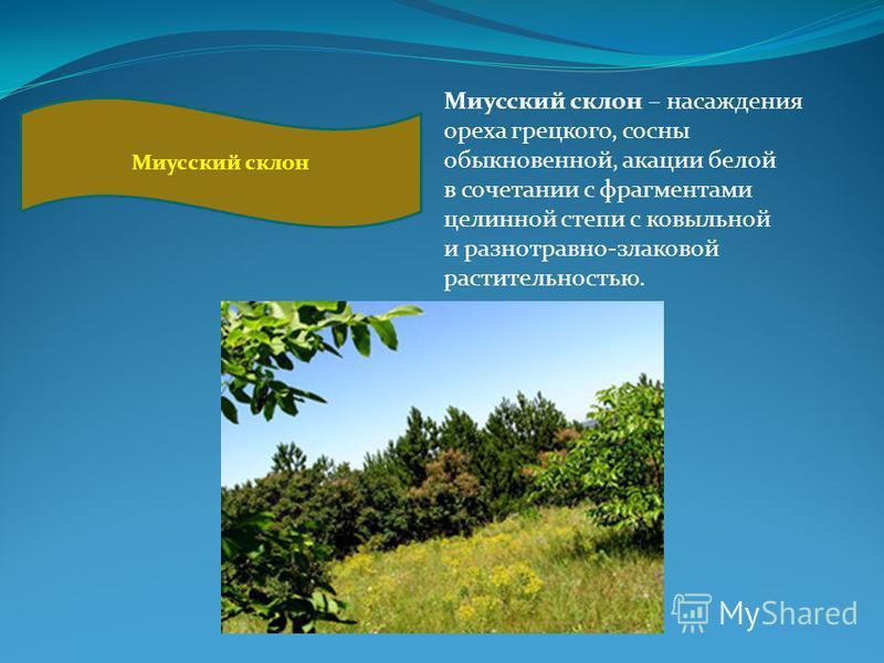 Миусский склон Миусский склон – насаждения ореха грецкого, сосны обыкновенной, акации белой в сочетании с фрагментами целинной степи с ковыльной и разнотравно-злаковой растительностью.