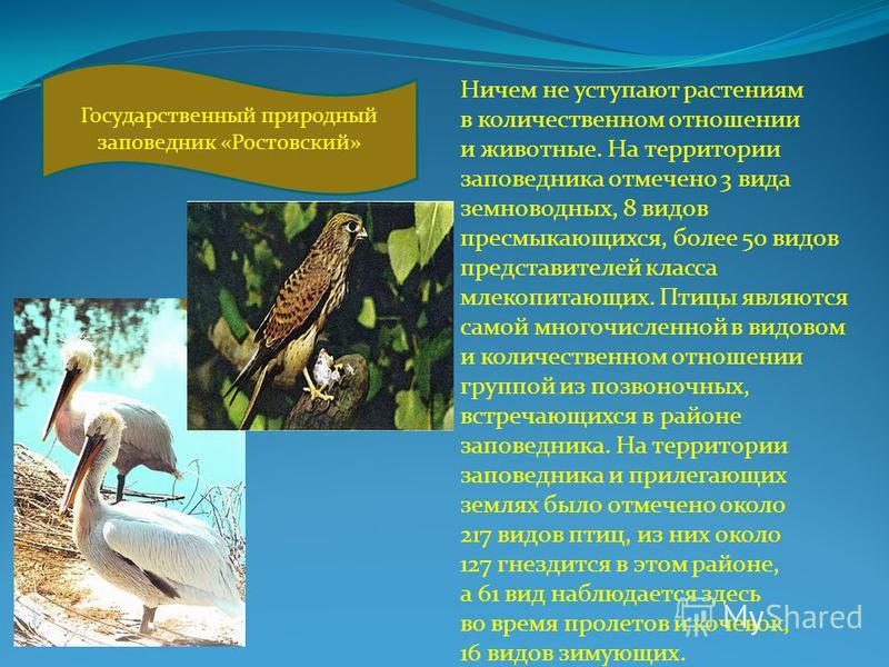 Ничем не уступают растениям в количественном отношении и животные. На территории заповедника отмечено 3 вида земноводных, 8 видов пресмыкающихся, более 50 видов представителей класса млекопитающих. Птицы являются самой многочисленной в видовом и коли