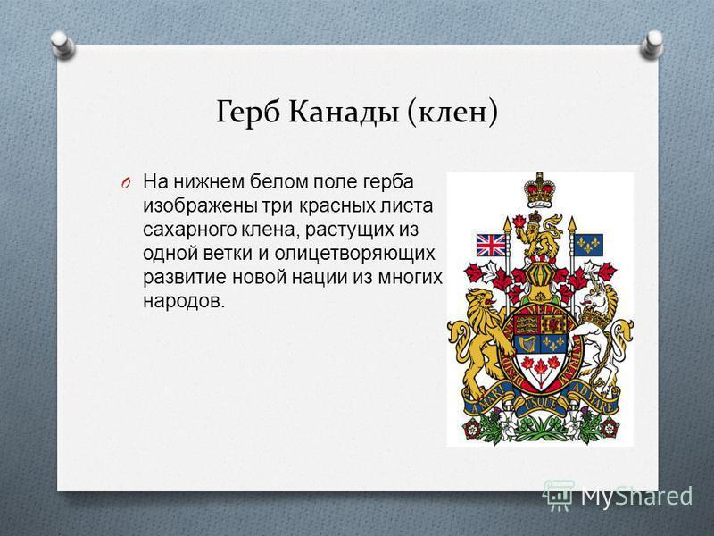 Герб Канады (клен) O На нижнем белом поле герба изображены три красных листа сахарного клена, растущих из одной ветки и олицетворяющих развитие новой нации из многих народов.