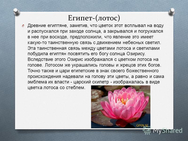 Египет-(лотос) O Древние египтяне, заметив, что цветок этот всплывал на воду и распускался при заходе солнца, а закрывался и погружался в нее при восходе, предположили, что явление это имеет какую - то таинственную связь с движением небесных светил.