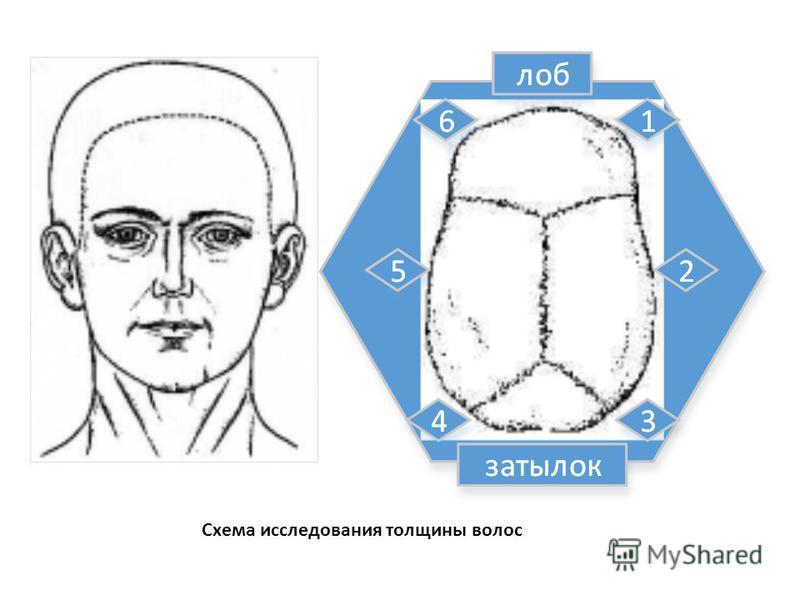 Схема исследования толщины волос