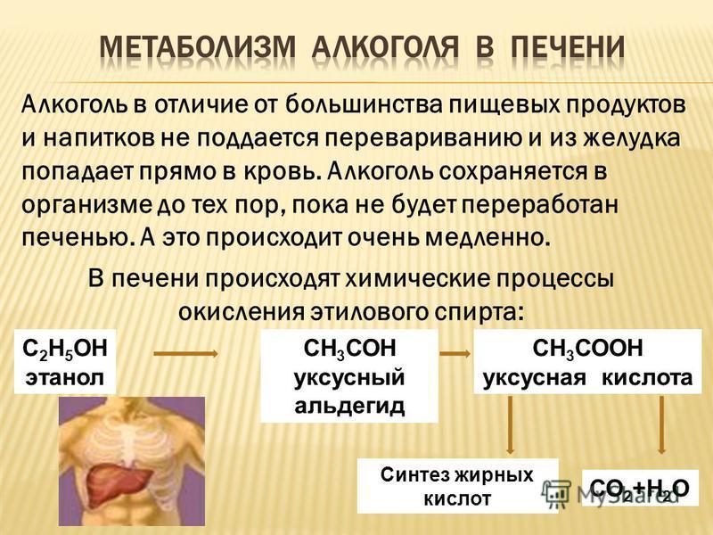 С 2 H 5 ОН этанол СН 3 СОН уксусный альдегид СН 3 СООН уксусная кислота Синтез жирных кислот СО 2 +Н 2 О Алкоголь в отличие от большинства пищевых продуктов и напитков не поддается перевариванию и из желудка попадает прямо в кровь. Алкоголь сохраняет