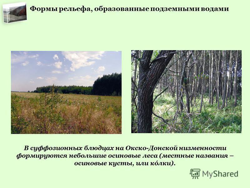 В суффозионных блюдцах на Окско-Донской низменности формируются небольшие осиновые леса (местные названия – осиновые кусты, или колки). Формы рельефа, образованные подземными водами