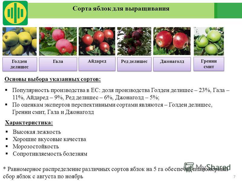 7 Сорта яблок для выращивания Голден делишес Основы выбора указанных сортов: Популярность производства в ЕС: доля производства Голден делишес – 23%, Гала – 11%, Айдаред – 9%, Ред делишес – 6%, Джонаголд – 5%; По оценкам экспертов перспективными сорта