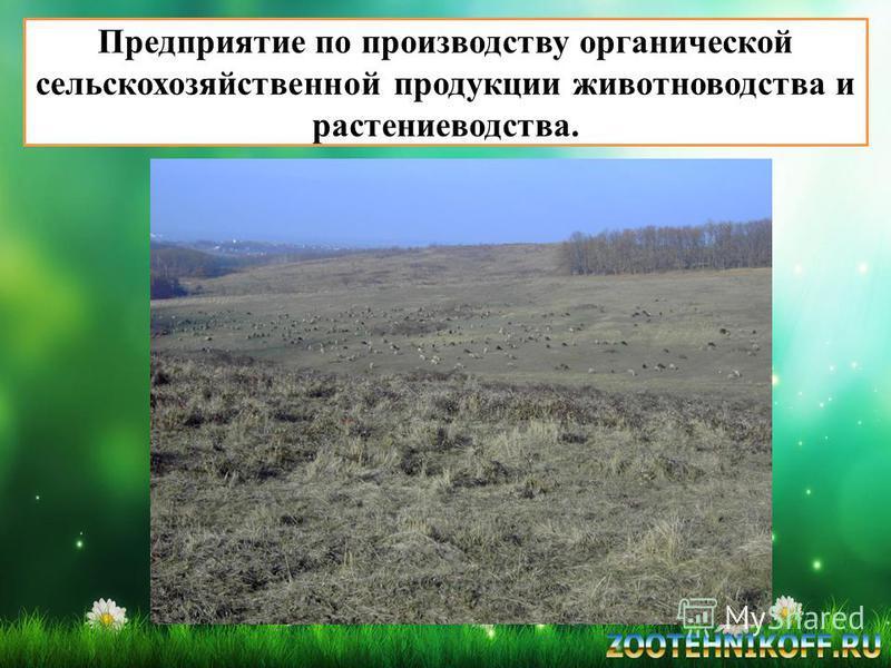 Предприятие по производству органической сельскохозяйственной продукции животноводства и растениеводства.