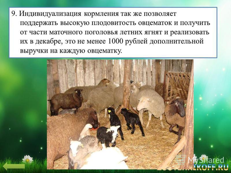 9. Индивидуализация кормления так же позволяет поддержать высокую плодовитость овцематок и получить от части маточного поголовья летних ягнят и реализовать их в декабре, это не менее 1000 рублей дополнительной выручки на каждую овцематку.