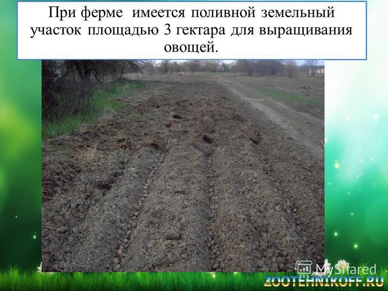 При ферме имеется поливной земельный участок площадью 3 гектара для выращивания овощей.