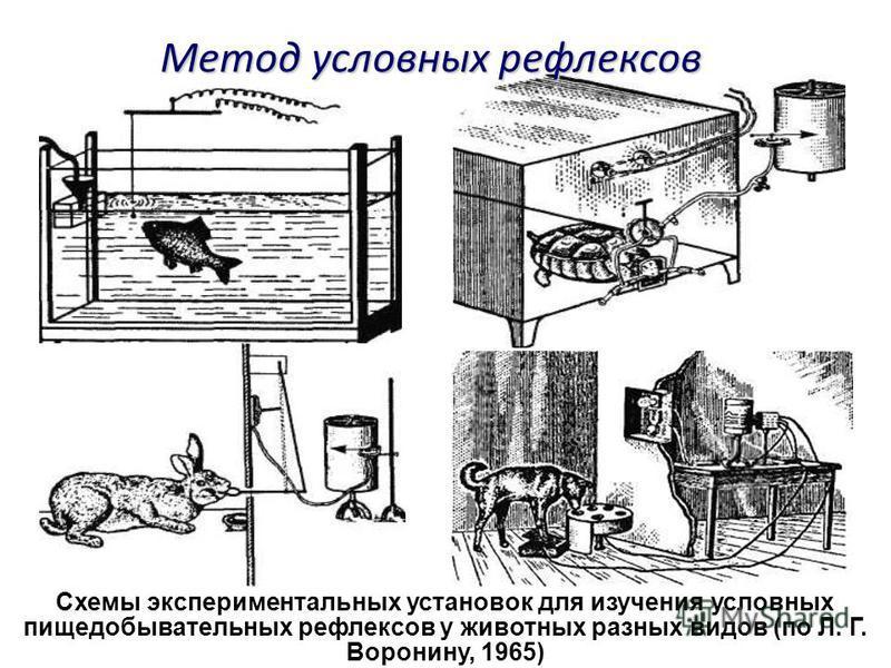Схемы экспериментальных установок для изучения условных пищедобывательных рефлексов у животных разных видов (по Л. Г. Воронину, 1965) Метод условных рефлексов