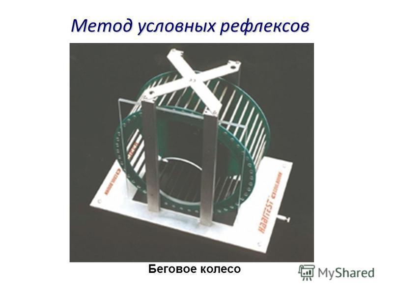 Беговое колесо Метод условных рефлексов