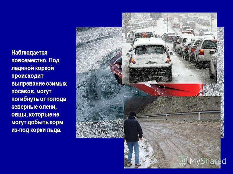 Наблюдается повсеместно. Под ледяной коркой происходит выпревание озимых посевов, могут погибнуть от голода северные олени, овцы, которые не могут добыть корм из-под корки льда.