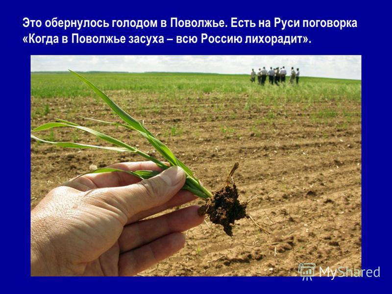 Это обернулось голодом в Поволжье. Есть на Руси поговорка «Когда в Поволжье засуха – всю Россию лихорадит».