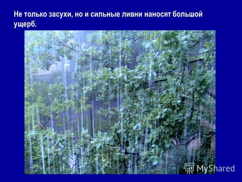 Не только засухи, но и сильные ливни наносят большой ущерб.