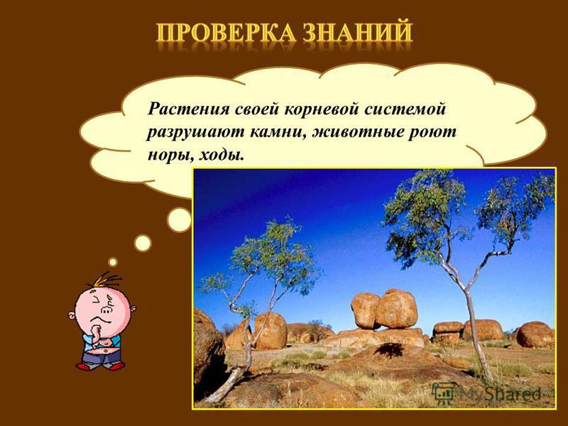 Как живые организмы влияют на рельеф? Растения своей корневой системой разрушают камни, животные роют норы, ходы.