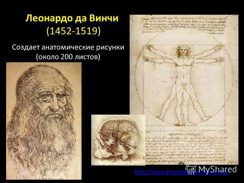 Леонардо да Винчи (1452-1519) http://www.drawingsofleonardo.org/ Создает анатомические рисунки (около 200 листов)