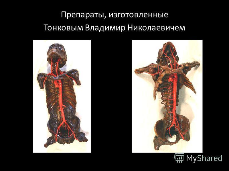 Препараты, изготовленные Тонковым Владимир Николаевичем