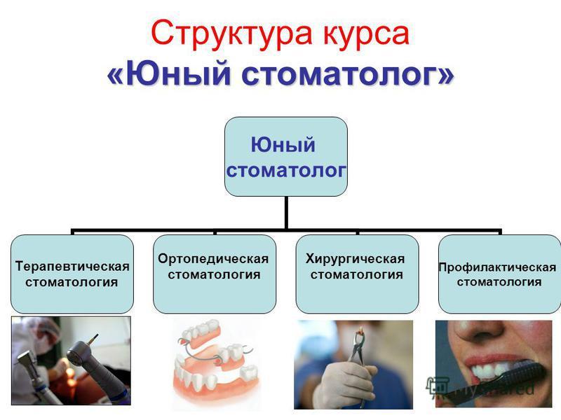 «Юный стоматолог» Структура курса «Юный стоматолог» Юный стоматолог Терапевтическая стоматология Ортопедическая стоматология Хирургическая стоматология Профилактическая стоматология