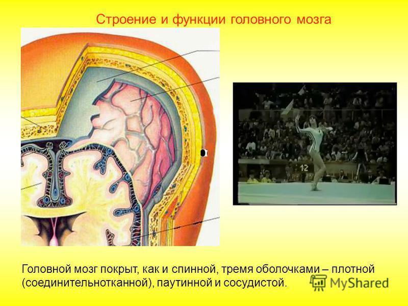Повторение Верные суждения в задании: «Спинной мозг» 1. Снаружи спинного мозга находится серое вещество, внутри белое. 2. Толщина спинного мозга около 1 см, длина в среднем 43 см. 3. Спинной мозг имеет три оболочки внутренняя твердая, средняя паутинн