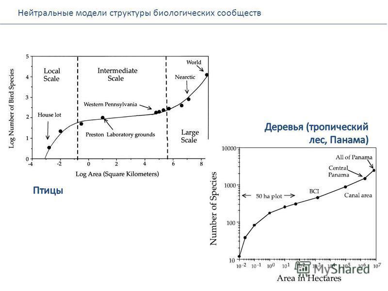 Нейтральные модели структуры биологических сообществ