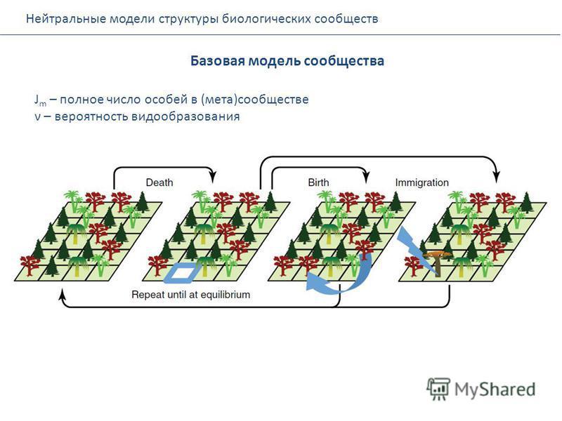 Нейтральные модели структуры биологических сообществ Базовая модель сообщества J m – полное число особей в (мета)сообществе ν – вероятность видообразования