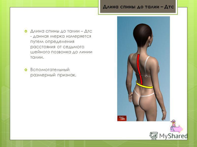 Длина спины до талии – Дтс - данная мерка измеряется путем определения расстояния от седьмого шейного позвонка до линии талии. Вспомогательный размерный признак. Длина спины до талии – Дтс
