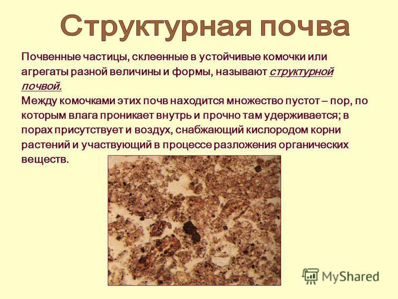 Почвенные частицы, склеенные в устойчивые комочки или агрегаты разной величины и формы, называют структурной почвой. Между комочками этих почв находится множество пустот – пор, по которым влага проникает внутрь и прочно там удерживается; в порах прис