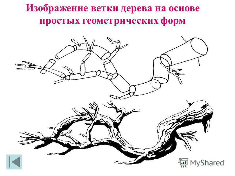 Изображение ветки дерева на основе простых геометрических форм