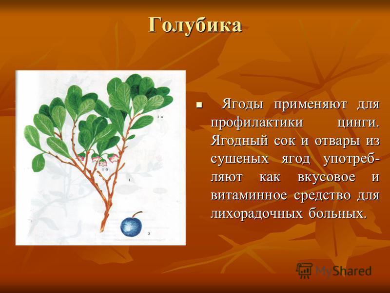 Голубика Ягоды применяют для профилактики цинги. Ягодный сок и отвары из сушеных ягод употребляют как вкусовое и витаминное средство для лихорадочных больных. Ягоды применяют для профилактики цинги. Ягодный сок и отвары из сушеных ягод употребляют ка