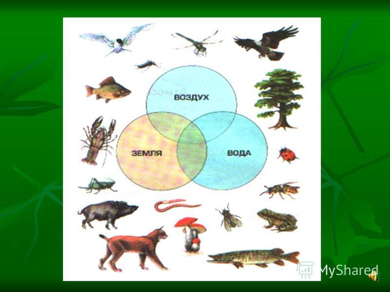 ЭКОСИСТЕМА единство живых организмов и их среды обитания, в котором живые организмы разных профессий способны совместными усилиями поддерживать круговорот веществ