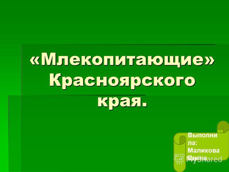 «Млекопитающие» Красноярского края. Выполни ла: Маликова Елена