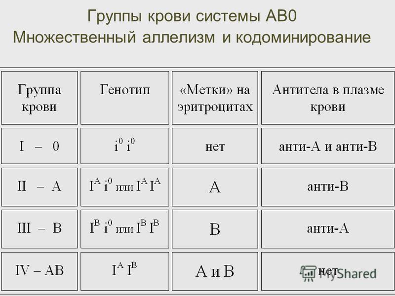 Группы крови системы АВ0 Множественный аллелизм и кодоминирование
