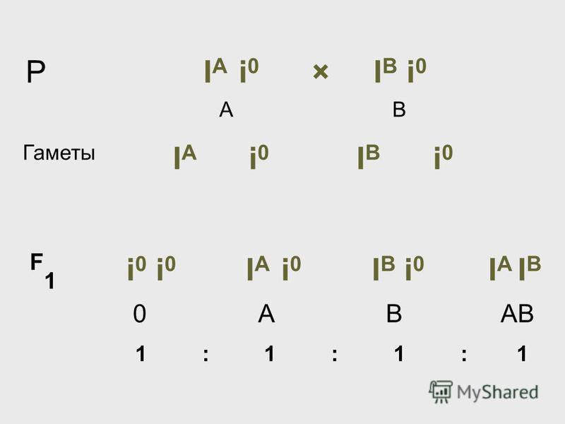 Р I А i 0 × I В i 0 А В Гаметы I А i 0 I В i 0 F 1 i 0 i 0 I А i 0 I В i 0 I А I В 0 А В АВ 1 : 1 : 1 : 1