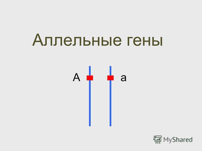Аллельные гены Аа