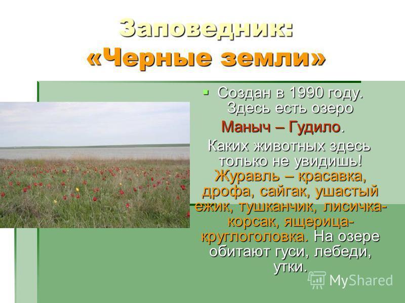 Заповедник: «Черные земли» Создан в 1990 году. Здесь есть озеро Создан в 1990 году. Здесь есть озеро Маныч – Гудило. Каких животных здесь только не увидишь! Журавль – красавка, дрофа, сайгак, ушастый ежик, тушканчик, лисичка- корсак, ящерица- круглог