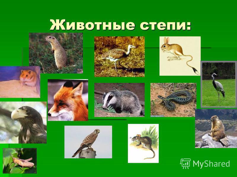 Животные степи: