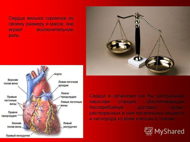3 Сердце весьма скромное по своему размеру и массе, оно играет исключительную роль. Сердце в организме как бы центральная насосная станция, обеспечивающая бесперебойную доставку крови, растворенных в ней питательных веществ и кислорода ко всем клетка