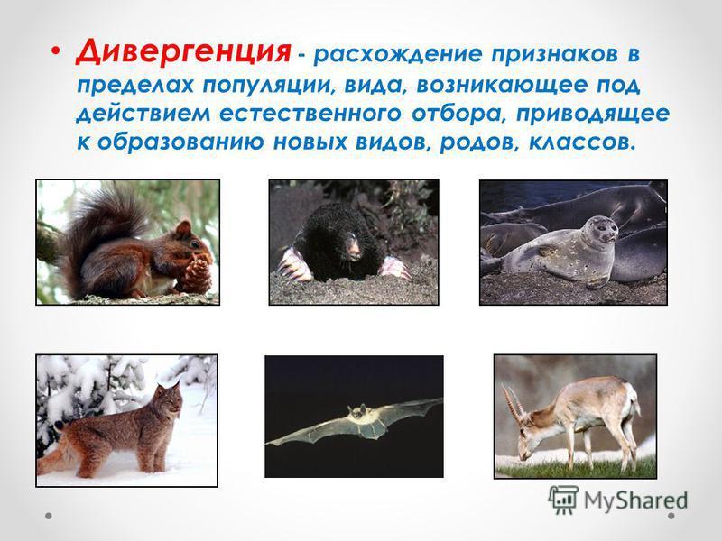 Дивергенция - расхождение признаков в пределах популяции, вида, возникающее под действием естественного отбора, приводящее к образованию новых видов, родов, классов.