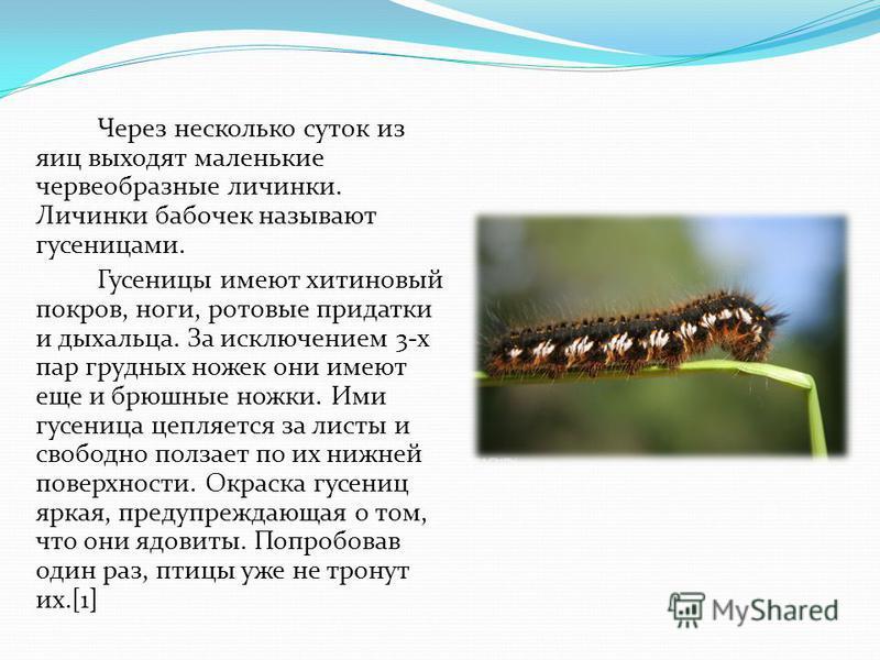 Через несколько суток из яиц выходят маленькие червеобразные личинки. Личинки бабочек называют гусеницами. Гусеницы имеют хитиновый покров, ноги, ротовые придатки и дыхальца. За исключением 3-х пар грудных ножек они имеют еще и брюшные ножки. Ими гус