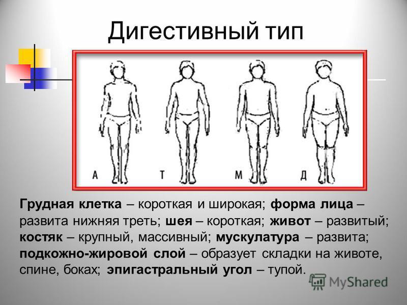 Дигестивный тип Грудная клетка – короткая и широкая; форма лица – развита нижняя треть; шея – короткая; живот – развитый; костяк – крупный, массивный; мускулатура – развита; подкожно-жировой слой – образует складки на животе, спине, боках; эпигастрал