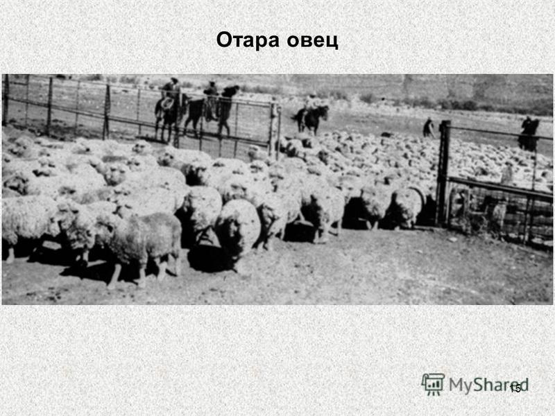 15 Отара овец