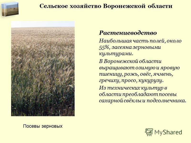 Сельское хозяйство Воронежской области Растениеводство Наибольшая часть полей, около 55%, засеяна зерновыми культурами. В Воронежской области выращивают озимую и яровую пшеницу, рожь, овёс, ячмень, гречиху, просо, кукурузу. Из технических культур в о