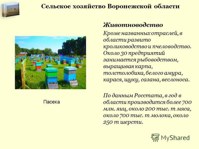 Сельское хозяйство Воронежской области Животноводство Кроме названных отраслей, в области развито кролиководство и пчеловодство. Около 30 предприятий занимается рыбоводством, выращивая карпа, толстолобика, белого амура, карася, щуку, сазана, веслонос