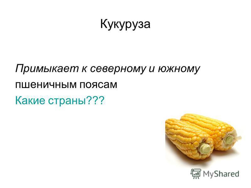 Примыкает к северному и южному пшеничным поясам Какие страны??? Кукуруза