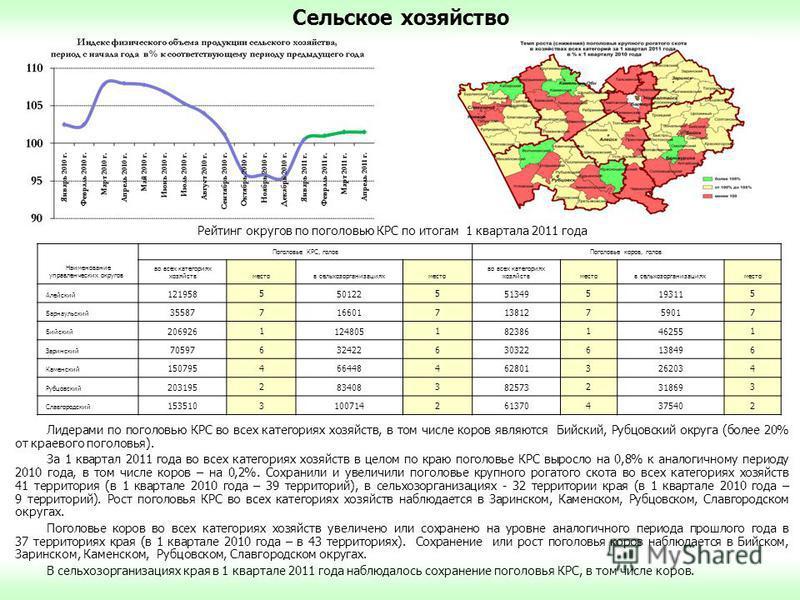 Сельское хозяйство Лидерами по поголовью КРС во всех категориях хозяйств, в том числе коров являются Бийский, Рубцовский округа (более 20% от краевого поголовья). За 1 квартал 2011 года во всех категориях хозяйств в целом по краю поголовье КРС выросл